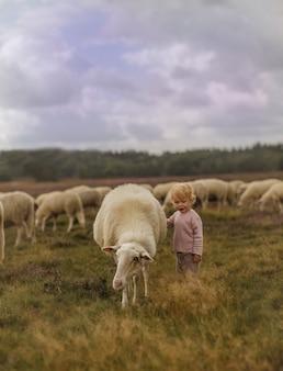 Verträumte aufnahme eines entzückenden kaukasischen kleinkindmädchens, das ein schaf auf einer farm streichelt