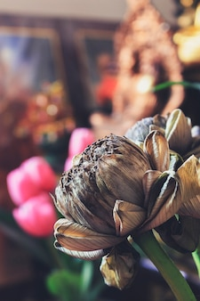 Verwelkte lotusblumen. über licht und vintage-ton