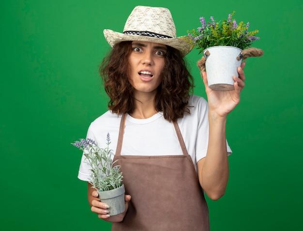 Verwirrter gärtner der jungen frau in der uniform, die gartenhut hält, der blumen in den auf grün isolierten blumentöpfen hält