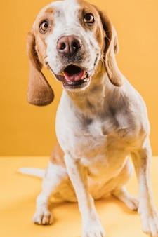 Verwirrter hund, der fotografen betrachtet