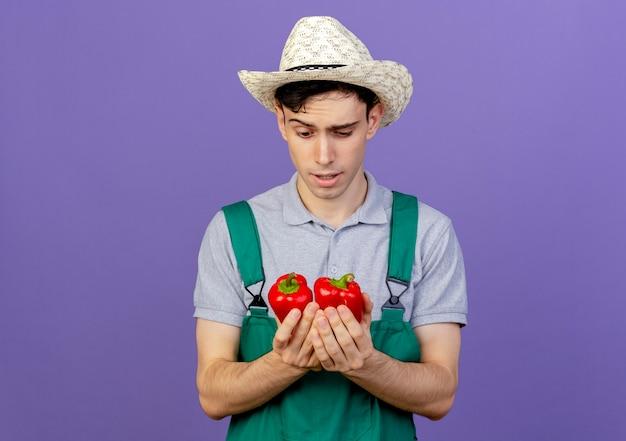 Verwirrter junger männlicher gärtner, der gartenhut trägt, hält und schaut rote paprikaschoten an