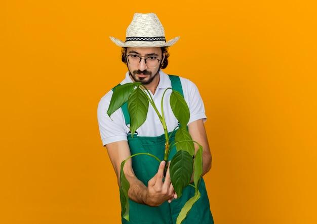 Verwirrter männlicher gärtner in der optischen brille, die gartenhut trägt, hält und betrachtet pflanze