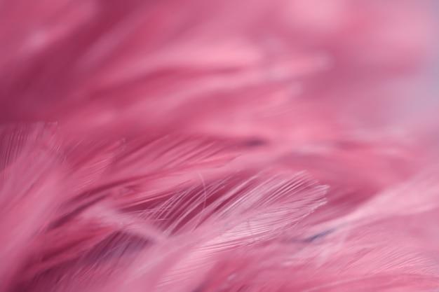 Verwischen sie hühnerfederbeschaffenheit für hintergrund, fantasie, abstrakte, weiche farbe des kunstdesigns.