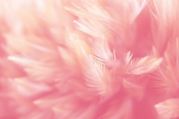 Verwischen sie vogelhühner-federbeschaffenheit für hintergrund, fantasie, weiche farbe des kunstdesigns.