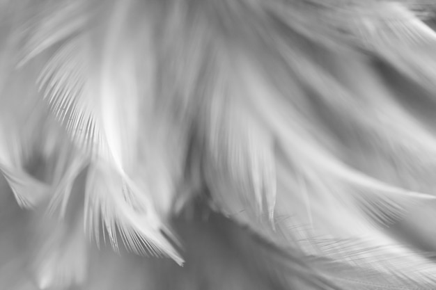 Verwischen sie vogelhühner-federbeschaffenheit für hintergrund