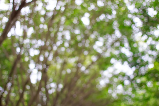 Verwischt vom grünen bokeh auf baumhintergrund