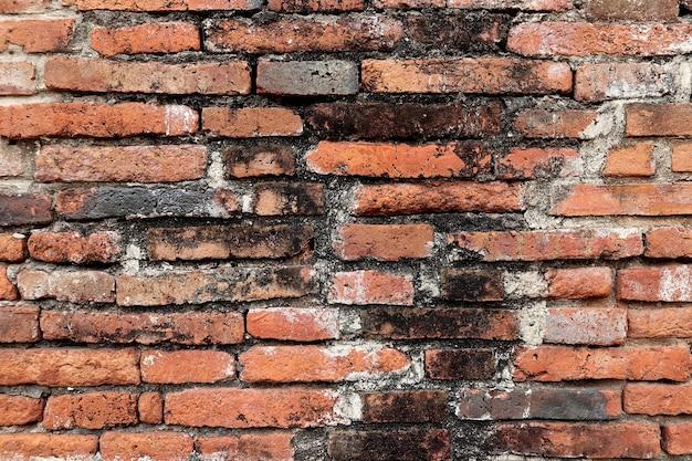 Verwitterte grunge roten backsteinmauer mit pilz schimmel