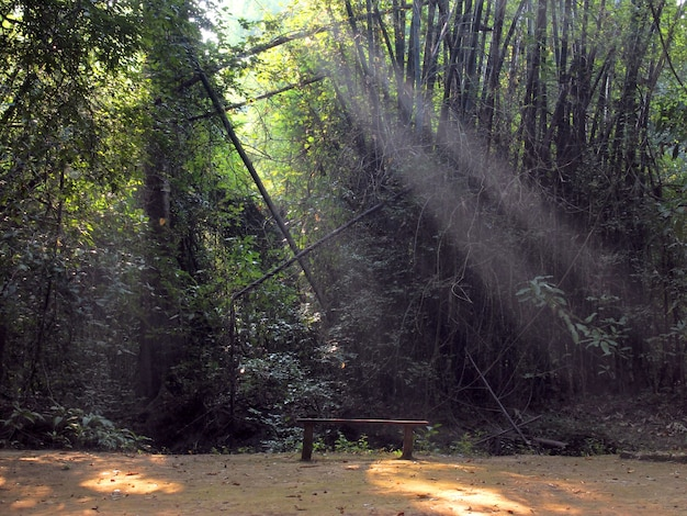 Verzauberter sommermorgenwald