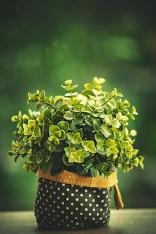Verzieren sie eingemachte zimmerpflanze auf hölzerner tabelle mit bokeh-hintergrund