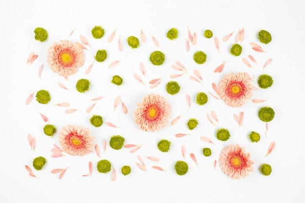 Verzierter weißer hintergrund mit gerberablumen