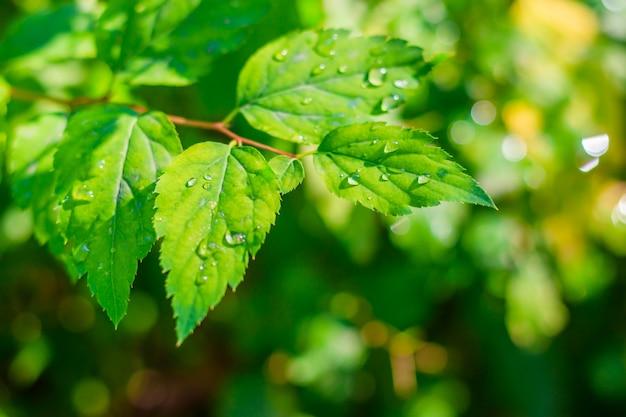 Verzweigen sie sich mit einem grünen blatt bush. grüne pflanze. photosynthese.