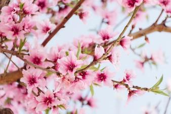 Verzweigen Sie sich mit schönen Blumen auf Baum