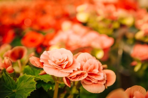 Vibrierende schöne exotische blumen im botanischen garten