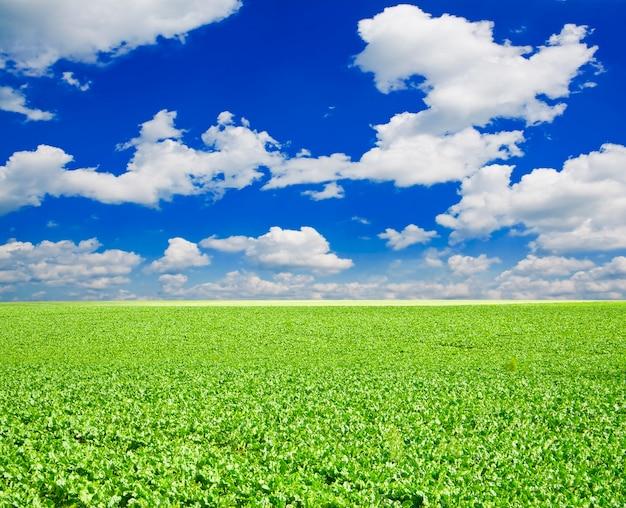 Viel grünes gras unter blauem himmel