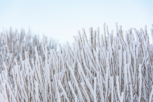 Viele äste bedeckt mit eis und frost nach starkem nachtnebel, nahaufnahme.