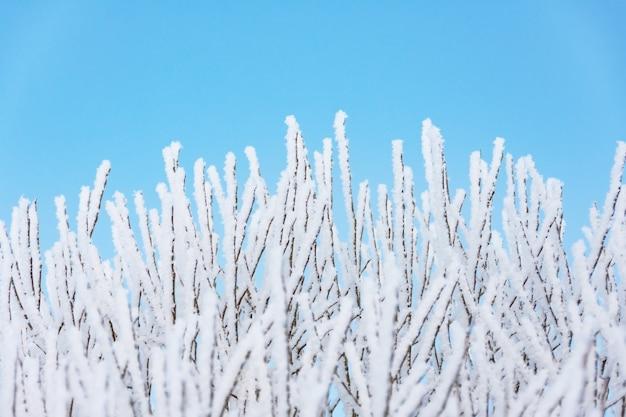 Viele äste nach einem starken nachtnebel mit eis und frost bedeckt, gegen einen blauen himmel.