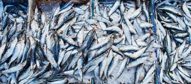 Viele atlantischen sardinenfische verkauft im kastenmarkt
