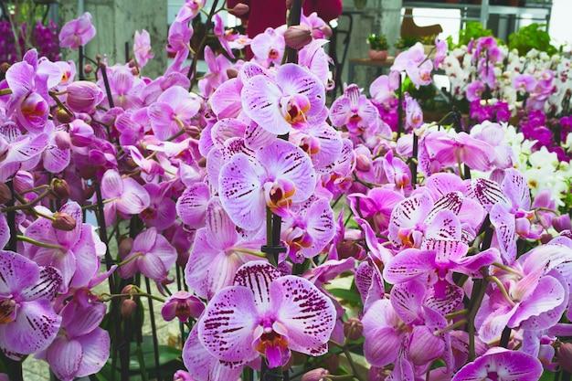 Viele blühende lila orchideen