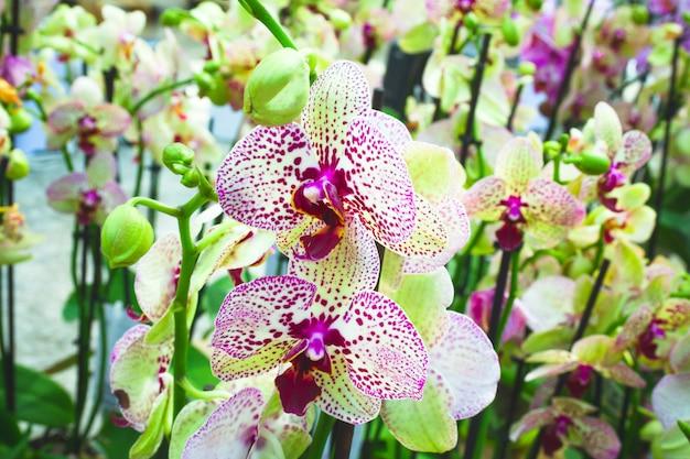 Viele blühende lila und gelbe orchideen