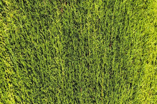 Viele details in diesem grünen heckenhintergrund