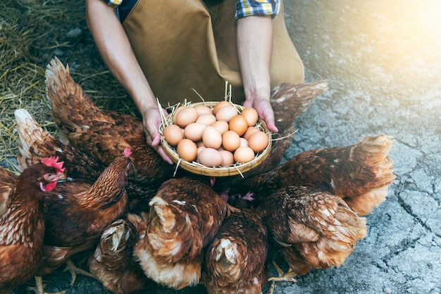 Viele frische hühnereier in einem weidenkorb, die bauern von hühnerfarmen sammeln