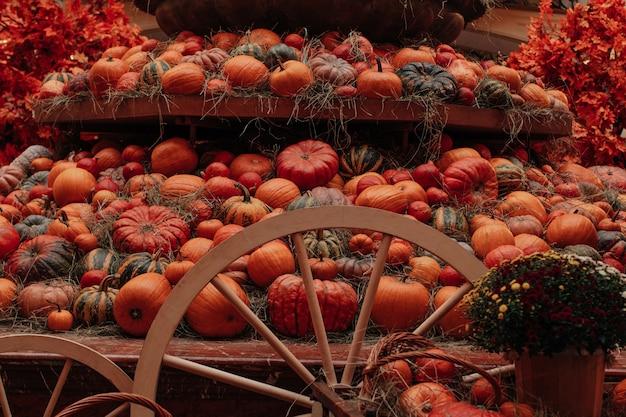 Viele frische leuchtend orange kürbisse liegen im heu herbstdekoration halloween und thanksgiving