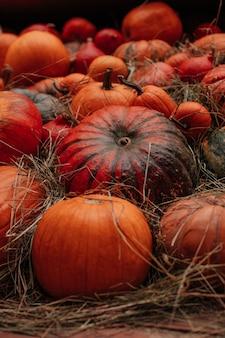 Viele frische orangefarbene kürbisse im heu herbstdekoration erntedankfest