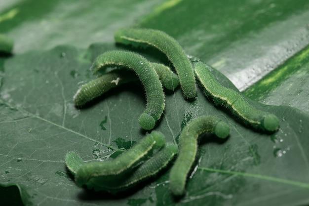 Viele grüne würmer auf den blättern