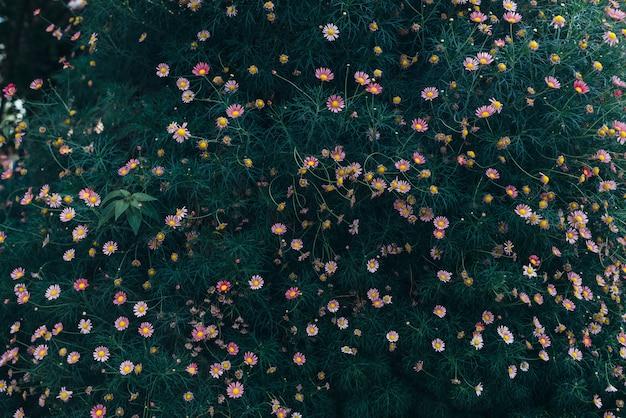 Viele kleine rosa blumen auf einem grünen hintergrund