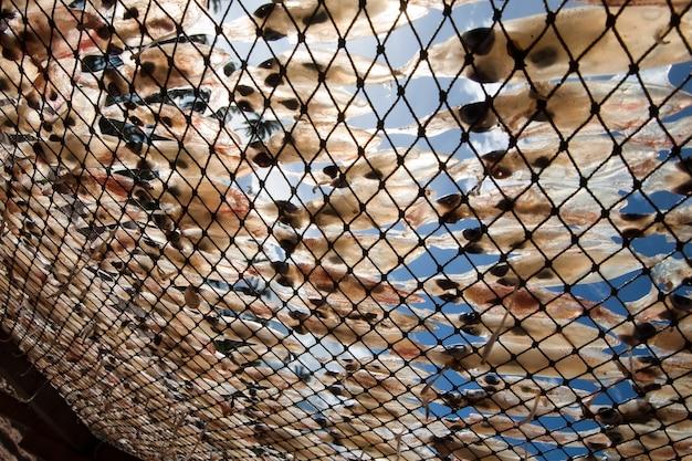 Viele kraken sind sonnenbaden. für die lebensmittelkonservierung
