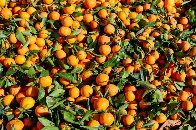 Viele marokkanische mandarinen liegen auf dem straßenmarkt