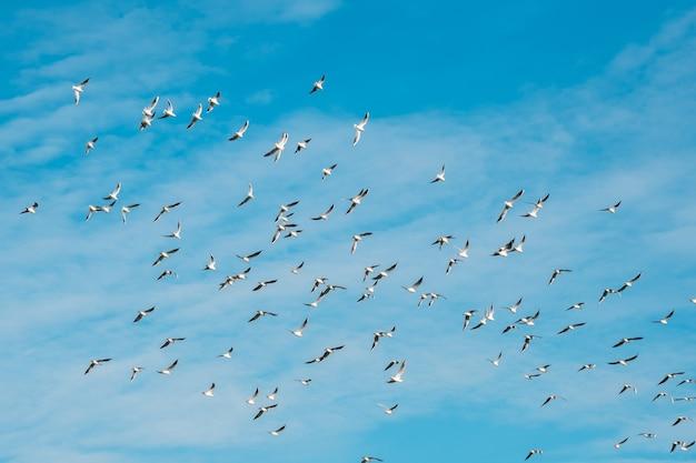 Viele möwen fliegen auf blauem himmel freiheit konzept hintergrund. tiere.