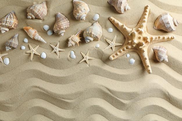 Viele muscheln und seesterne auf meersand, platz für text und draufsicht. sommerferienkonzept
