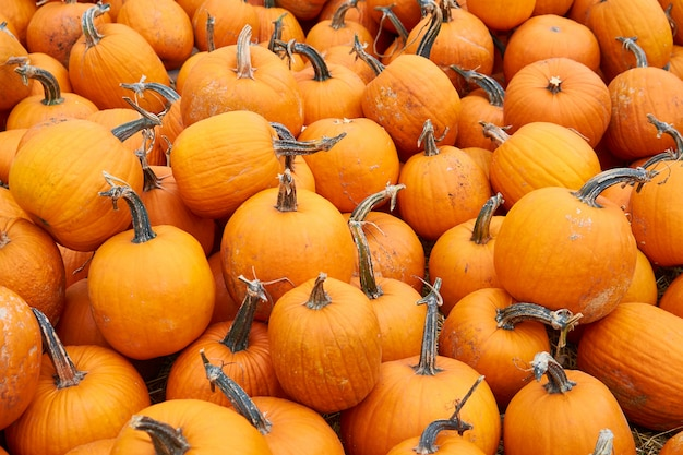 Viele orange kürbise erwarten verkauf am gemüsemarkt