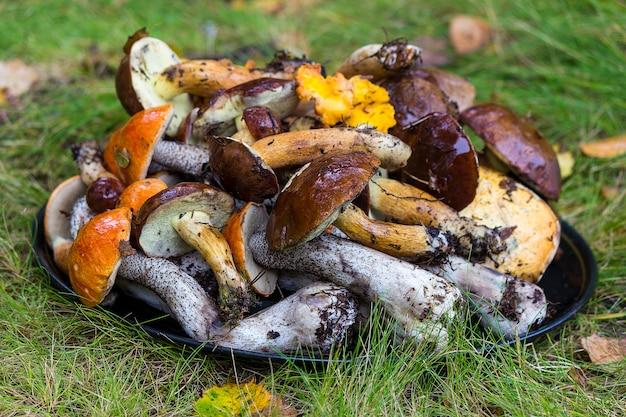 Viele pilze liegen im gras