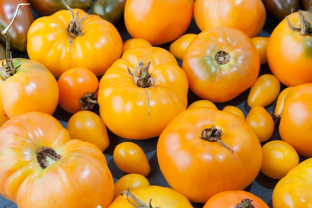 Viele reife frische gelbe tomaten. erntekonzept