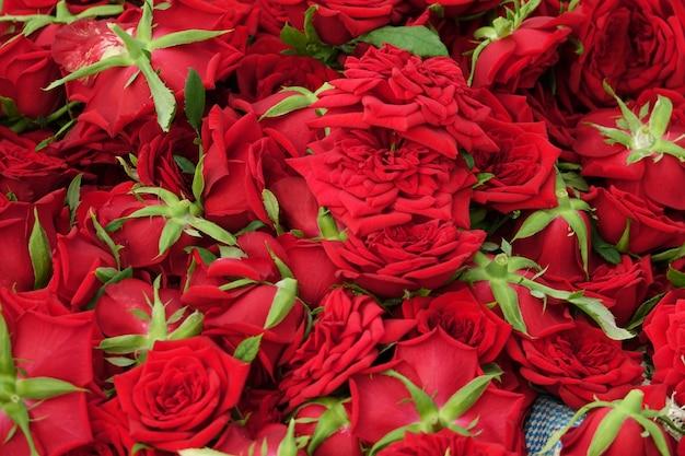 Viele rosen zusammen