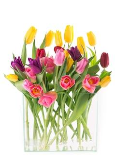 Viele schöne bunte tulpen mit blättern in einer glasvase lokalisiert auf transparentem hintergrund. foto mit frischen frühlingsblumen für jedes festliche design