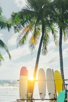 Viele surfbretter neben kokospalmen am sommerstrand mit sonnenlicht und blauem himmelhintergrund.