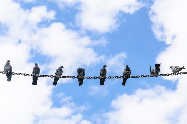 Viele tauben hockten auf einer stahlkette mit blauem himmelhintergrund