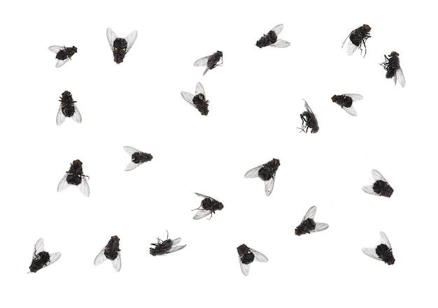 Viele tote fliegen auf weißem hintergrund