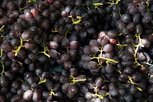 Viele trauben frisch geernteter trauben.
