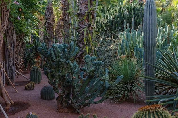 Viele unterschiedliche kakteenvielfalt in den gärten von majorelle.
