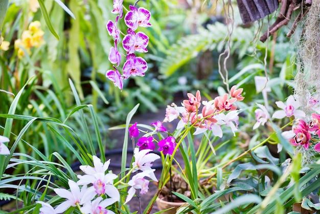 Viele verschiedene orchideen im tropischen garten. schöne frühlingsblumen mit weichem grünem hintergrund