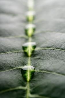 Viele wassertropfen auf einem schön arrangierten bananenblatt