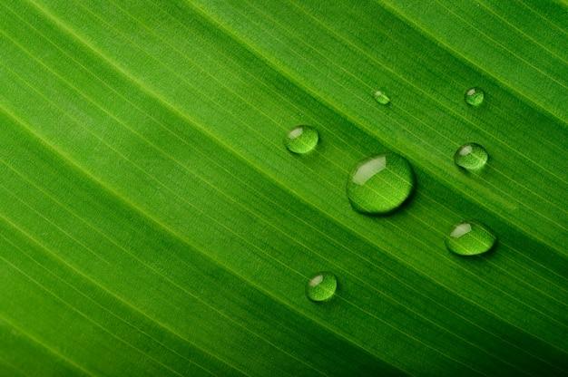 Viele wassertropfen fallen auf bananenblätter
