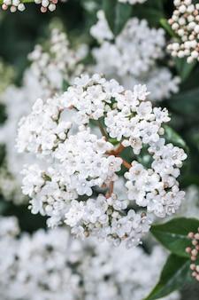 Viele weiße wilde blüten