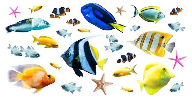 Vielfalt von hellen tropischen fischen isoliert auf weißem hintergrund