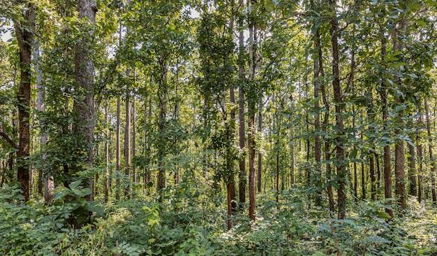 Vielzahl von bäumen entlang des weges in der provinz mae hong son, thailand