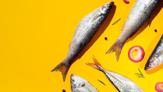 Vielzahl von frischen fischen mit kiemen